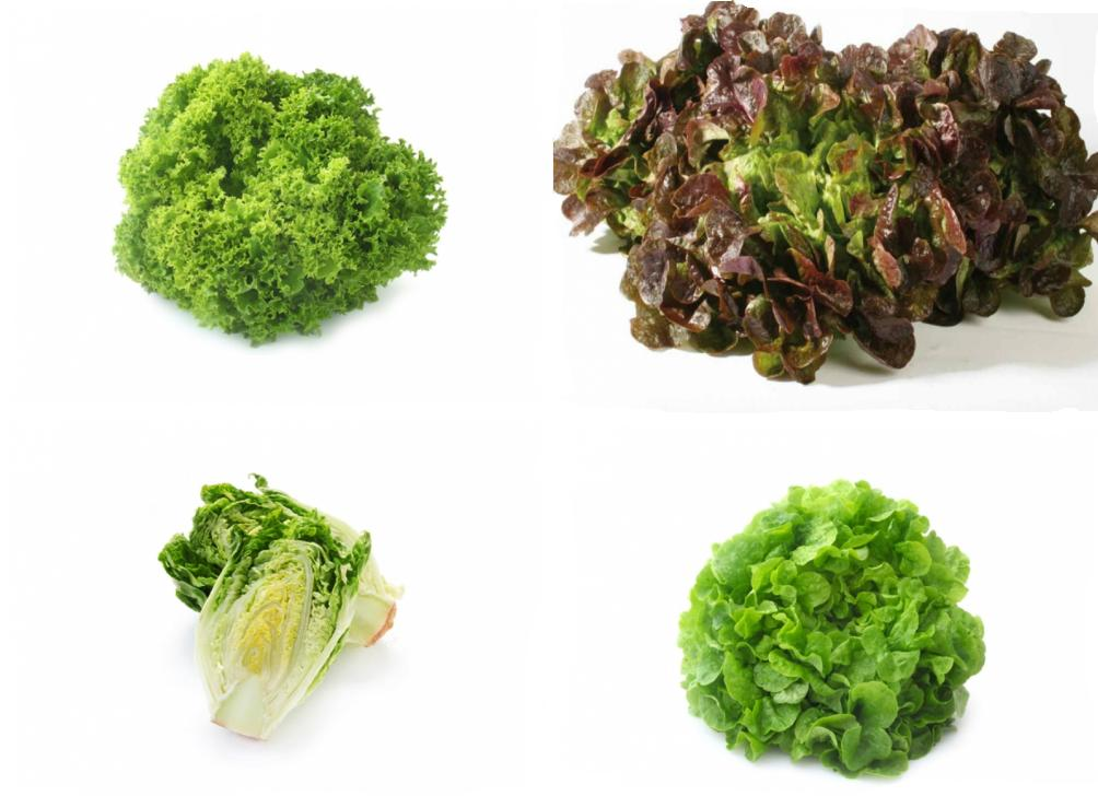 Lettuce pod vegetables